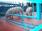 покрытие  помещений для содержания животных