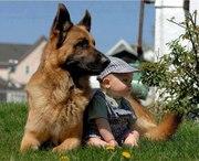 Воспитание собак в г. Елабуга
