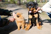 Школа дрессировки собак в Набережных Челнах