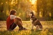 Дрессировка щенков и взрослых собак. г. Набережные Челны