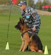 Дрессировка собак г. Елабуга