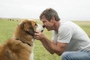 Дрессировка собак по системе армейских кинологов!
