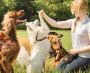 Дрессировка собак: ОКД , ЗКС ,  BH/VT,  IPO(IGP)