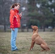 Частная служба дрессировки собак