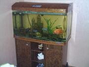 аквариум  JEBO R 300